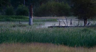 Goose in the Fall - Lee Metcalf Wildlife Preserve, Montana