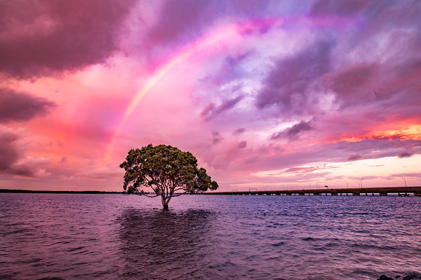 Rainbow over a lonely tree in the ocean.