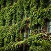 Glimpses Through Ivy 2/100