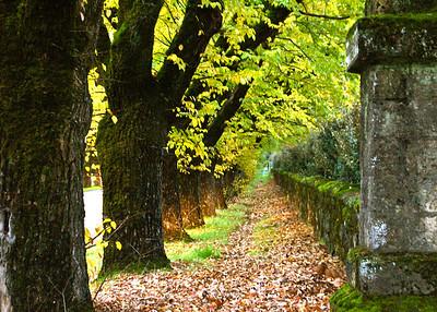 Quiet Path 3/100