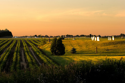 A planted farm field and family cemetery in southwestern Ontario,