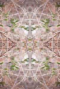 A unique mandala inspired nature photograph.