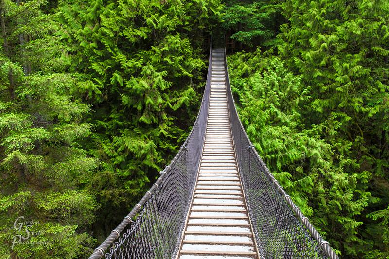 Suspension Bridge over Forest Gorge