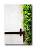Door & Ivy