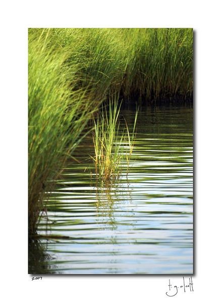Summer Creek, Madaket, August 2007