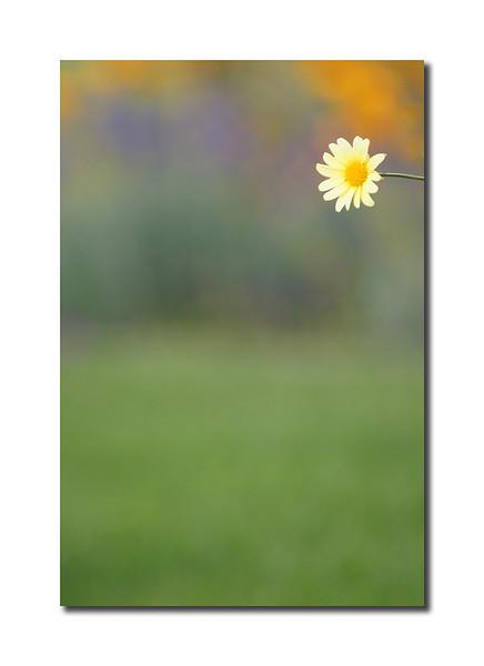 Summer Flower, Nantucket