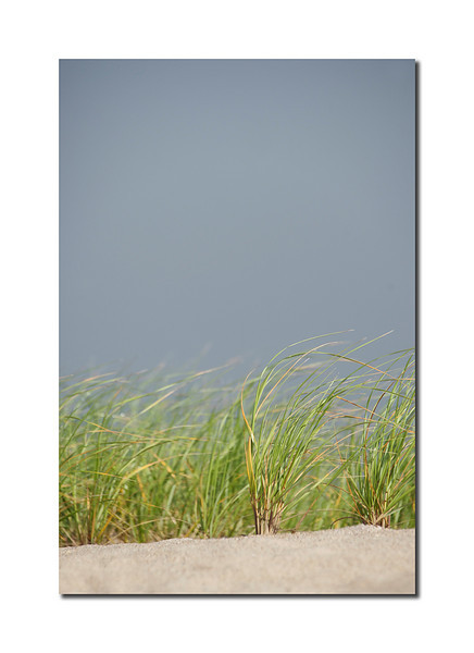 Afternoon Grass, Nantucket
