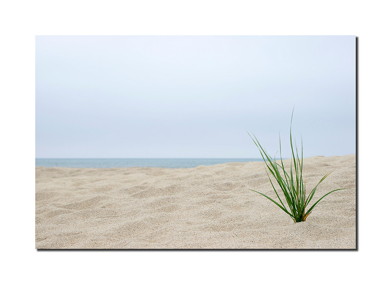 West End Grass, Nantucket