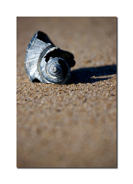 Shell Detail, Nantucket