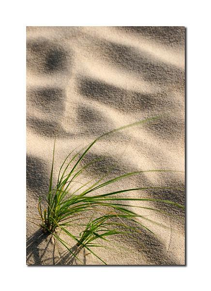 Grass Shadows, Nantucket