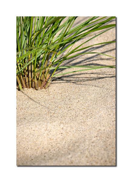 Grass Detail II, Nantucket