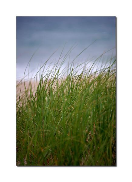 Grass Detail III, Nantucket