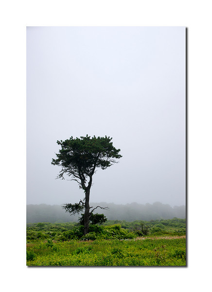 Lone Tree, Nantucket