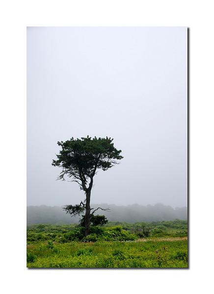 Lone Tree, Nantucket