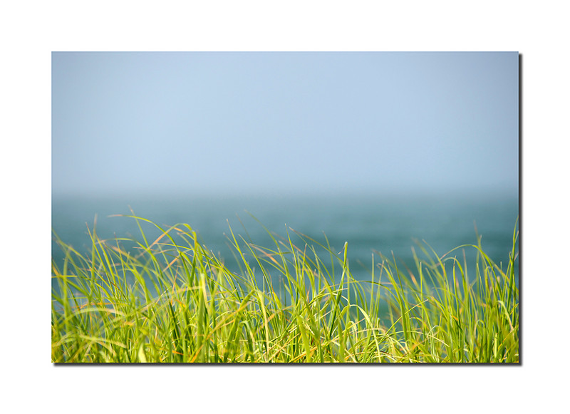 Beach Grass Detail, Nantucket
