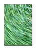 Grass Blur, Detail