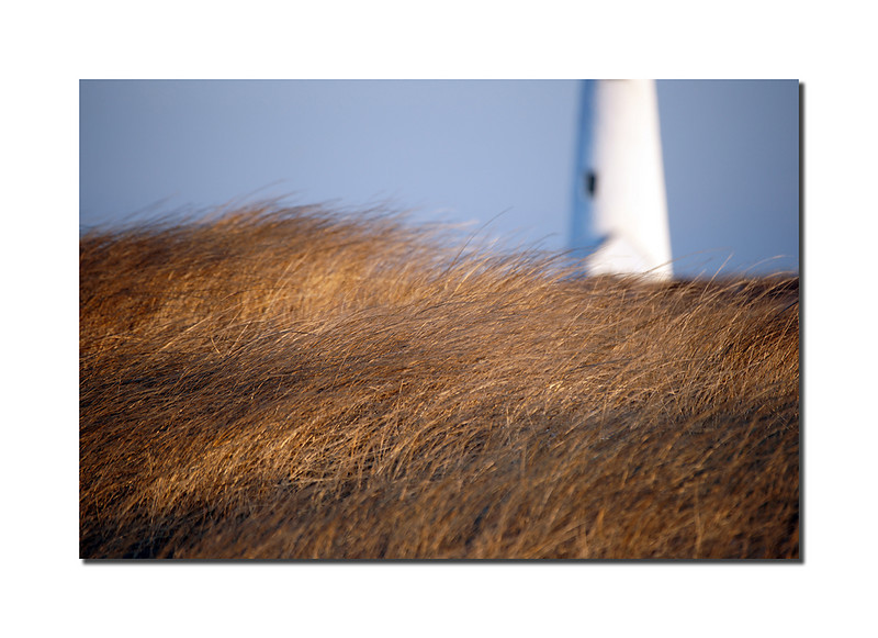 Great Point Lighthouse, Nantucket