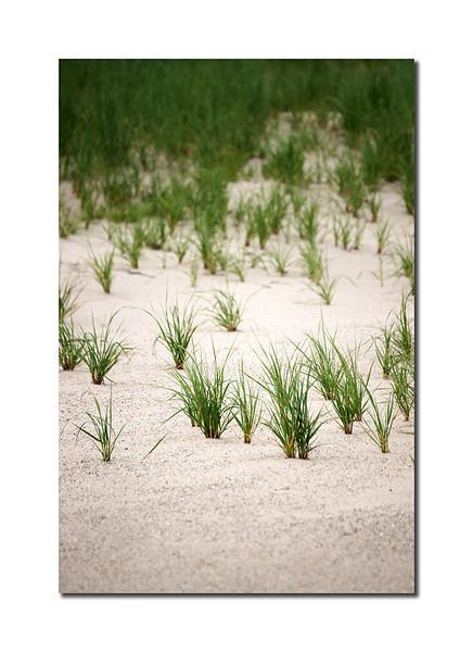 Smith Point Grass, Nantucket