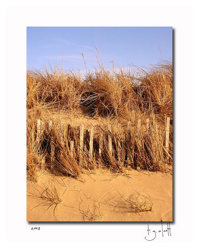 Miacomet Dune, March 2003