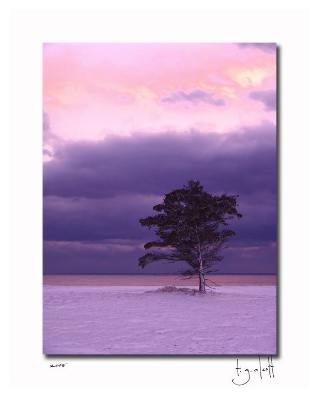 Winter Tree, January 2005