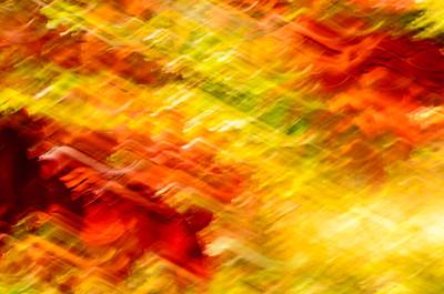 Fall Impressions Red & Green I