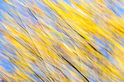 Fall Impressions Blue and Yellow III