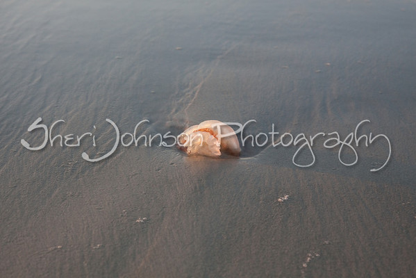 jellyfish washed up on the beach