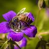 Collecting Bee II