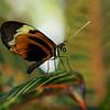 0003-butterfly-flamingo-bird6-15
