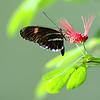 0030-butterfly-flamingo-bird6-15