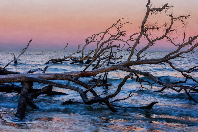 Boneyard Beach, Hunting Island
