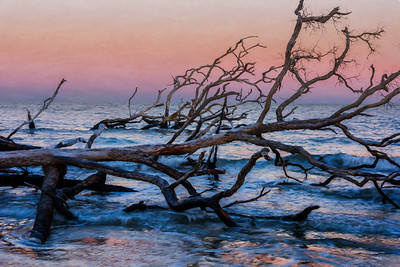 Boneyard Beach, Hunting Island