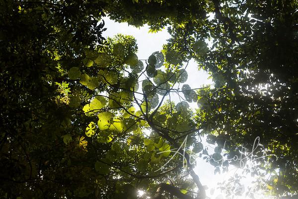 Nature-1326