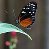 0034-butterfly-flamingo-bird6-15