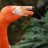 0014-butterfly-flamingo-bird6-15
