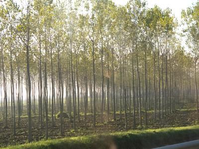 ItalyNov2012-3018.jpg