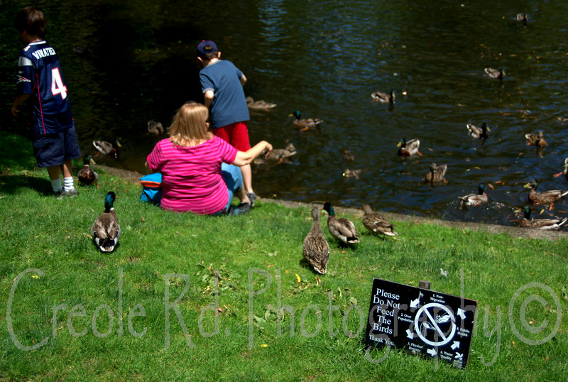 Don't feed the birds-1