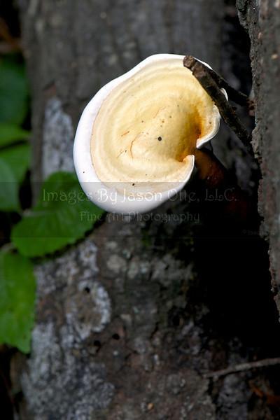 Houston Arboretum 2010-05-30 - 13-19-08