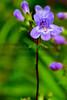 Houston Arboretum 2010-05-30 - 13-06-07