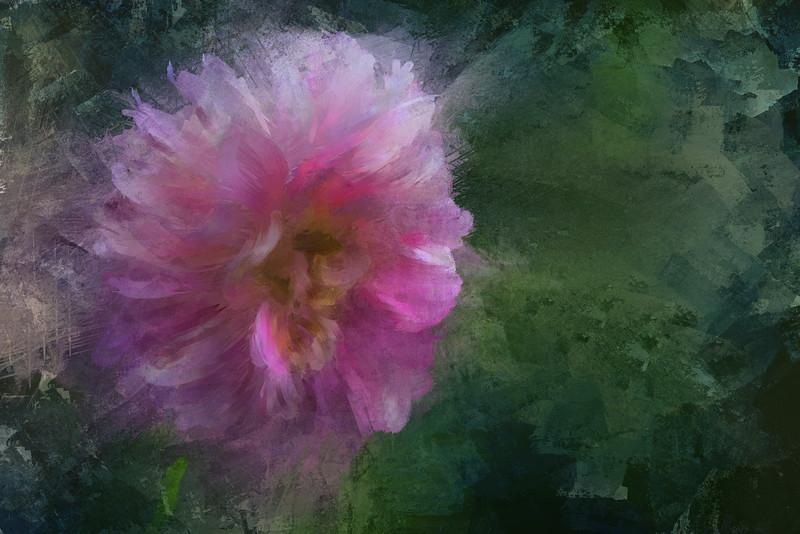 Monet's Pinkest Dahlia copy