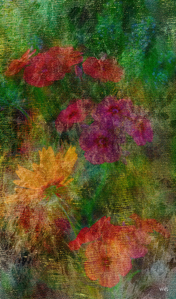 Phlox and Coreopsis with Texture and Paint