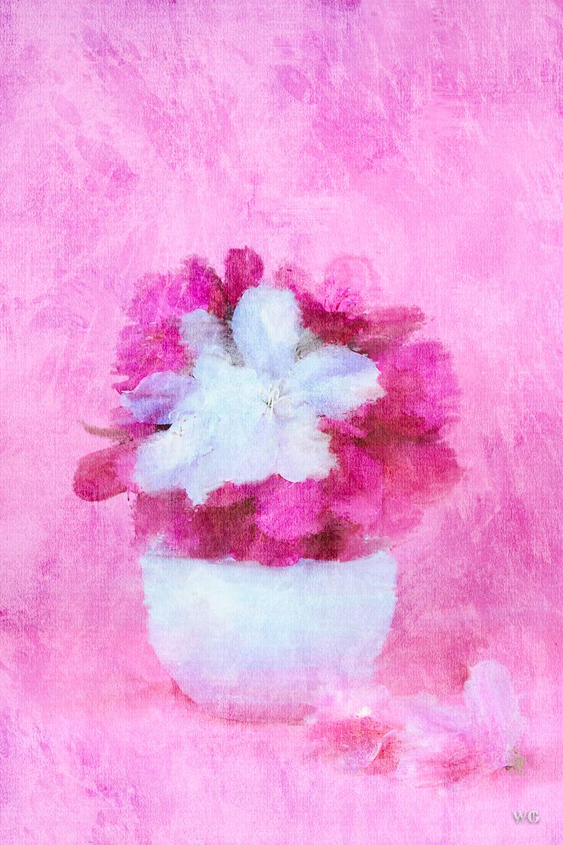 Pink painted portrait azaleas