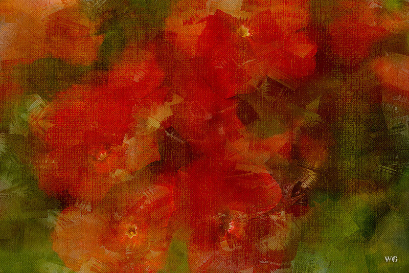 Red Drummond Phlox with Paint and Textures