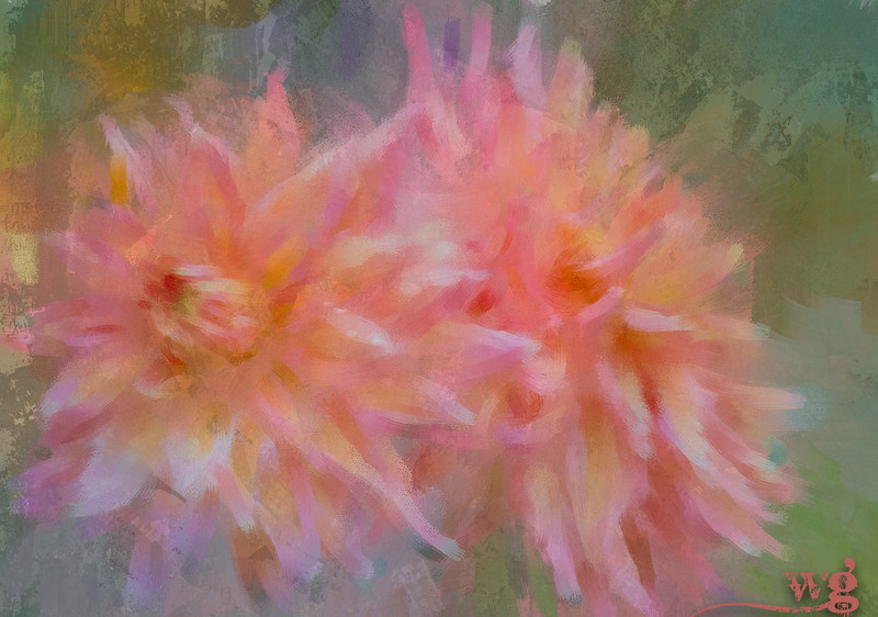 Monet's Sunrise Dahlias