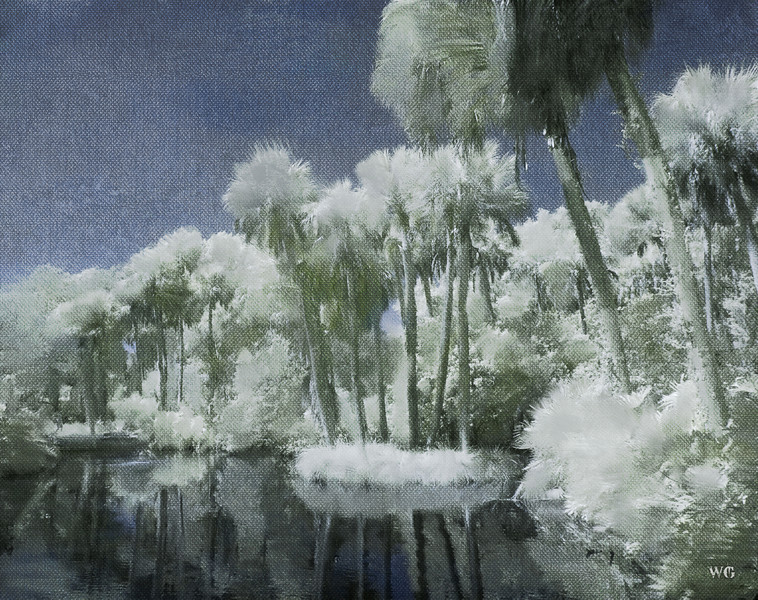Palm Trees in a Pool Infrared Painted_