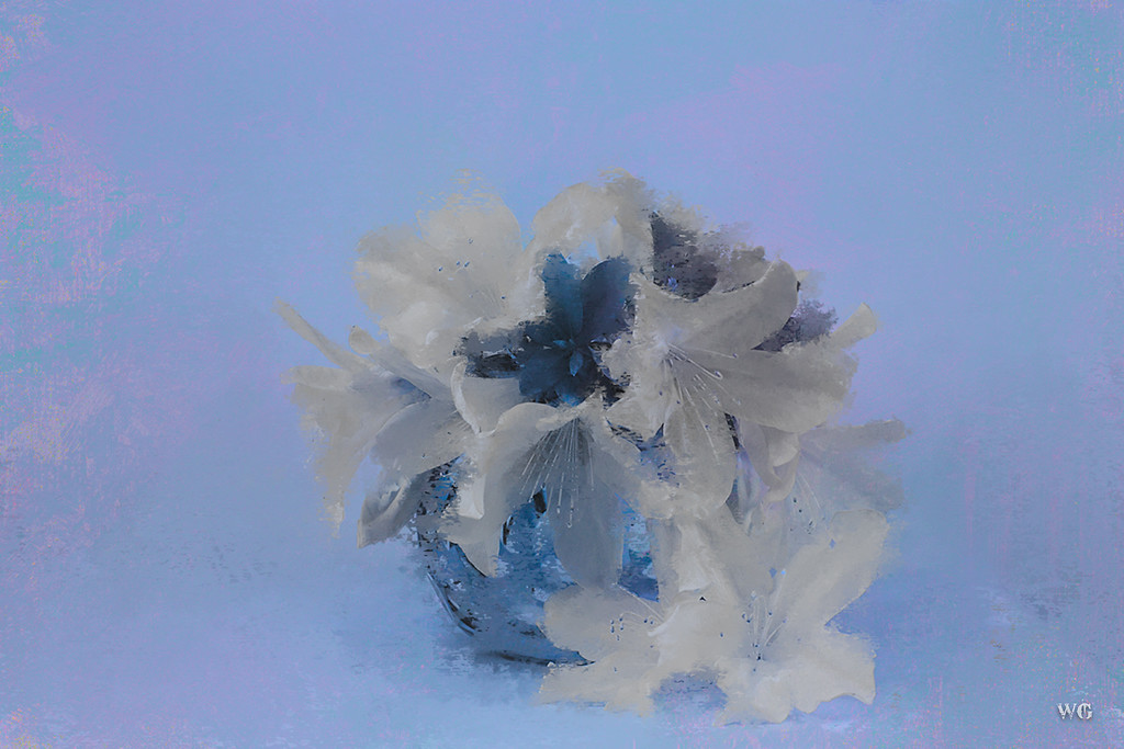 White azaleas painted