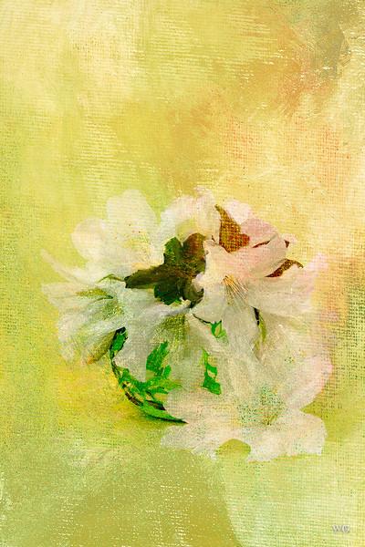 White azaleas with texture