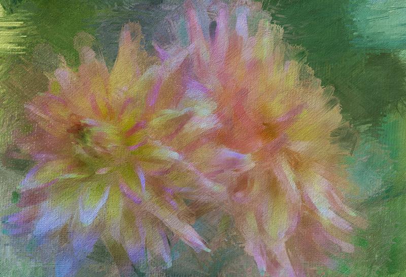 Rainbow Dahlias Texture
