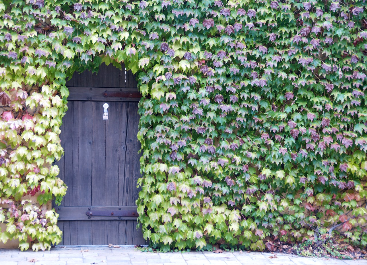 Door_Window 5