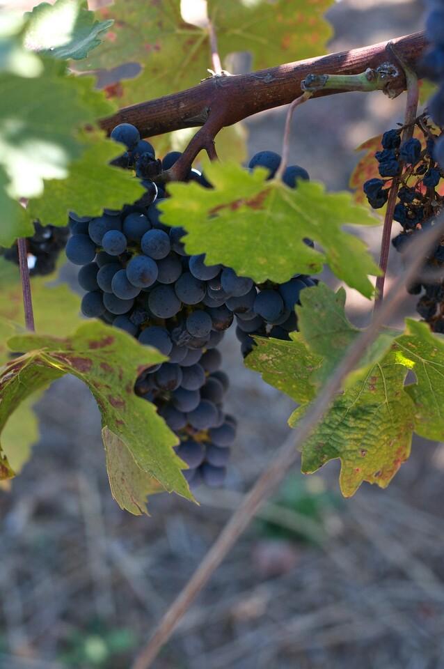 Wine 32